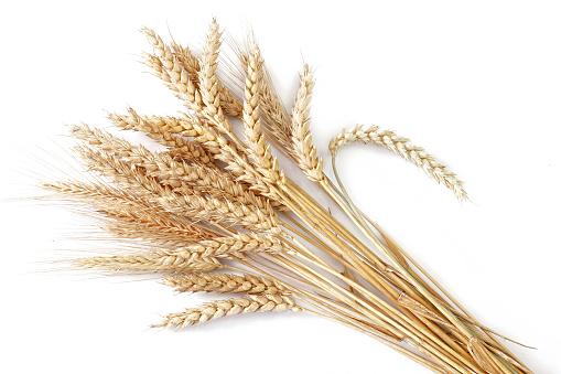 Wheat「Wheat」:スマホ壁紙(5)