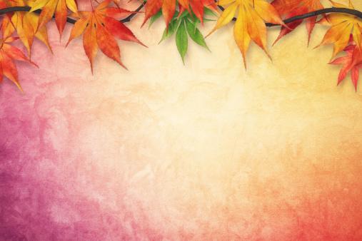 かえでの葉「秋の背景」:スマホ壁紙(7)