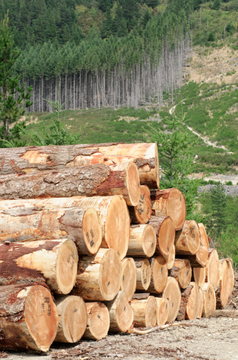 Log「Timber Stack and Forest」:スマホ壁紙(13)