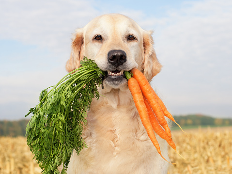 Snack「Dog with vegetables」:スマホ壁紙(16)