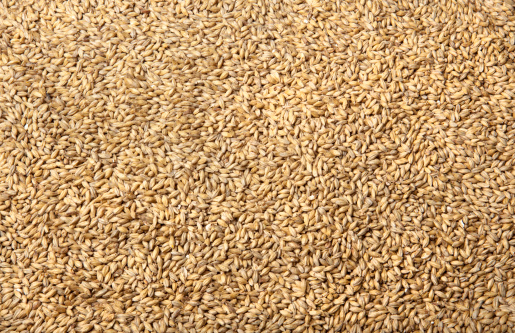 Barley「Malted Barley for Brewing Beer」:スマホ壁紙(2)