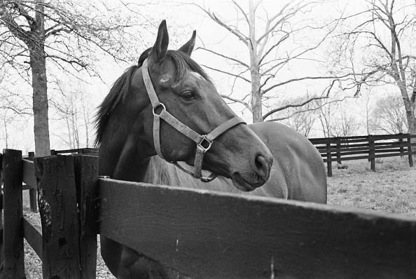Horse「Equine Nijinsky」:写真・画像(18)[壁紙.com]