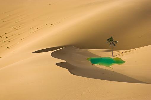 Dry「Desert Oasis」:スマホ壁紙(7)