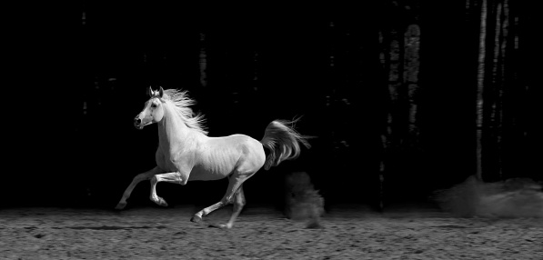 Horse「Horse in Corral, Black and White」:スマホ壁紙(4)