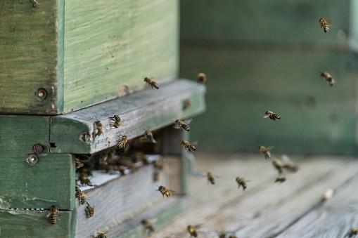 Approaching「Germany, organic farm, bees flying at beehive」:スマホ壁紙(6)