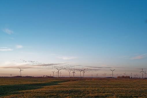 Flock Of Birds「Barnacle geese flying over wind turbines, East Frisia, Lower Saxony, Germany」:スマホ壁紙(14)