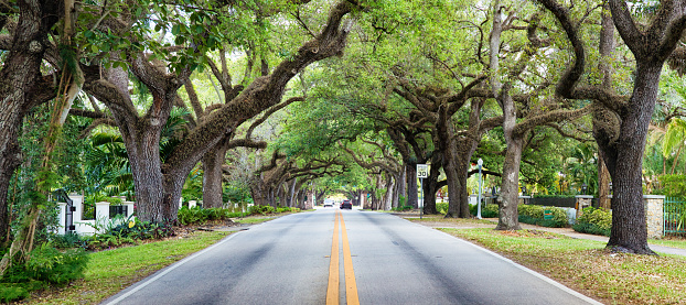 Southern USA「Miami Coral Gables street under tree canopy panorama」:スマホ壁紙(19)