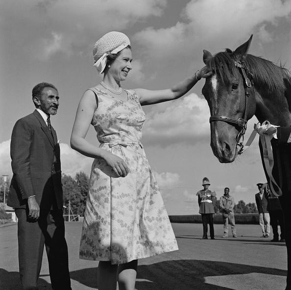 Horse「Elizabeth II」:写真・画像(2)[壁紙.com]
