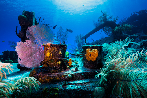 Soft Coral「Reef life growing on the Doc Polson wreck in Grand Cayman, Cayman Islands.」:スマホ壁紙(3)