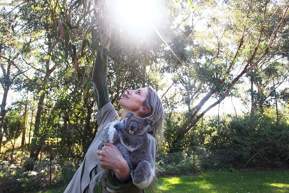 Tropical Tree「Koala Joeys Born In Captivity Bring Hope For Species Numbers Following Bushfires」:写真・画像(12)[壁紙.com]