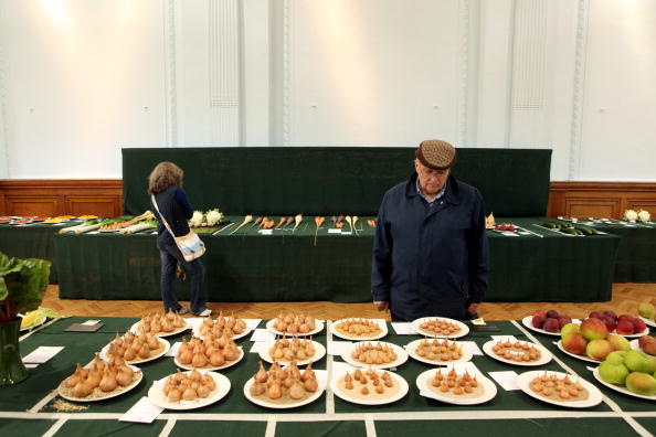 Onion「The RHS Taste Of Autumn Show Opens To The Public」:写真・画像(9)[壁紙.com]