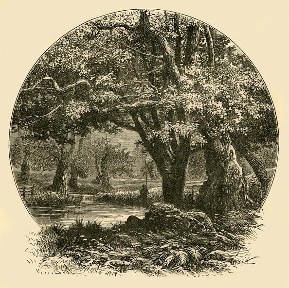 Water's Edge「Oaks At Bradgate」:写真・画像(19)[壁紙.com]