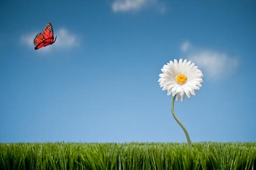 Planting「Butterfly Landing On Gerbera Daisy」:スマホ壁紙(11)