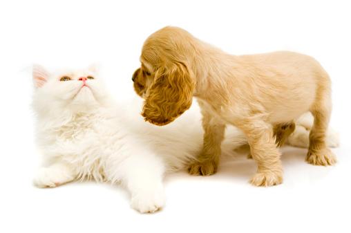 Puppy「friends,」:スマホ壁紙(13)