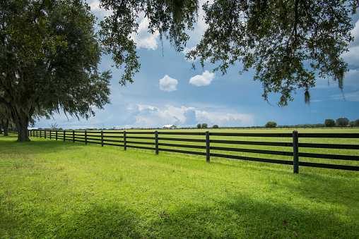 South「Florida, Myakka City, Farmland」:スマホ壁紙(11)