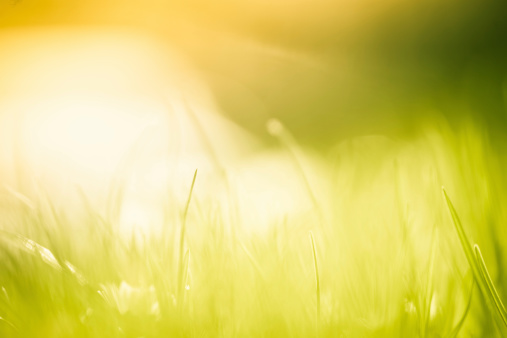 Agricultural Field「Blades of grass in the field.」:スマホ壁紙(16)