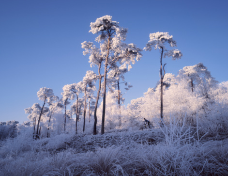 North Brabant「Netherlands, Noord-Brabant, Oisterwijk forest in snow」:スマホ壁紙(16)