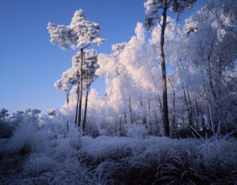 North Brabant「Netherlands, Noord-Brabant, Oisterwijk forest in snow」:スマホ壁紙(17)