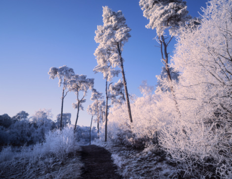 North Brabant「Netherlands, Noord-Brabant, Oisterwijk forest in snow」:スマホ壁紙(15)