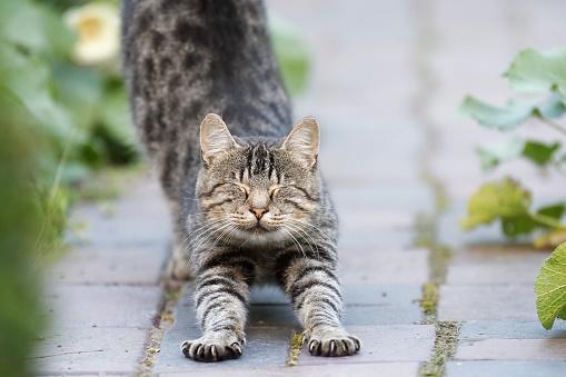 Stretching「Tabby cat stretching」:スマホ壁紙(13)
