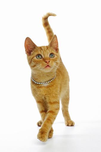 Walking「Ginger cat wearing rhinestone collar」:スマホ壁紙(17)