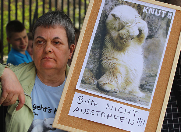 Condiment「Knut Fans Protest Possible Stuffing Of Knut Body」:写真・画像(10)[壁紙.com]