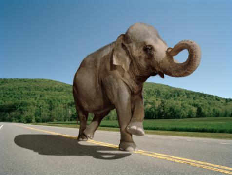 Walking「elephant walking down the straight line」:スマホ壁紙(7)
