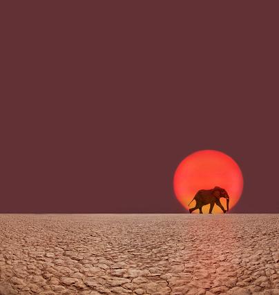 Walking「Elephant walking.」:スマホ壁紙(13)