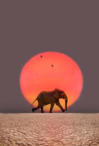 Walking「Elephant walking.」:スマホ壁紙(16)