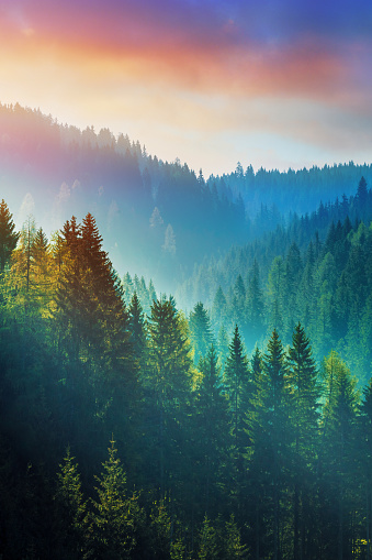 Pine Woodland「Mountains at sunrise - the Dolomites in South Tyrol, Italy」:スマホ壁紙(13)