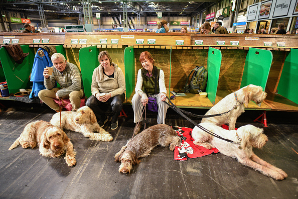 Day 2「Crufts 2020 -Day Two」:写真・画像(10)[壁紙.com]