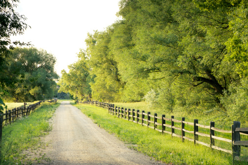 Dirt Road「Country road with big green trees and fences at either side」:スマホ壁紙(10)