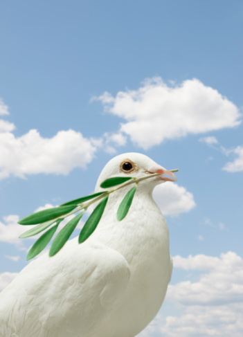 Digital Composite「Dove holding olive branch」:スマホ壁紙(4)