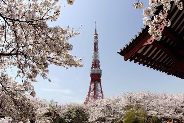 Tokyo Tower「Cherry Blossoms Bloom In Japan」:写真・画像(14)[壁紙.com]