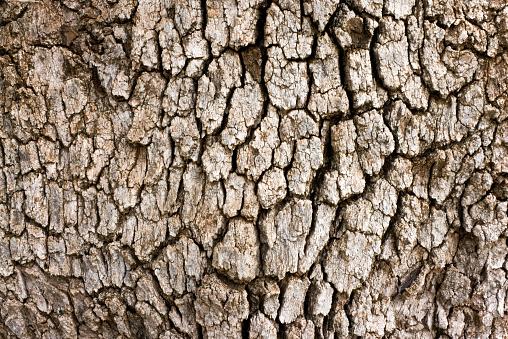 Plant Bark「Tree Bark」:スマホ壁紙(18)
