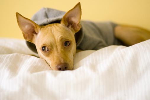 Sweatshirt「Dog resting」:スマホ壁紙(18)