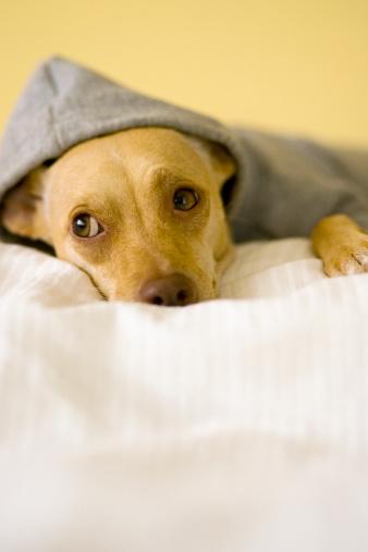Sweatshirt「Dog resting」:スマホ壁紙(17)