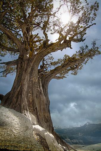 Sedona「USA, Arizona, Sedona, Sun shining through juniper tree」:スマホ壁紙(10)