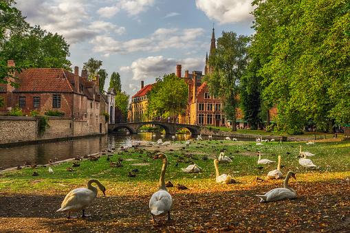 Flock Of Birds「Swans in a Public Park in Bruges, Belgium」:スマホ壁紙(15)