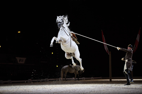 Horse「The World Famous Spanish Riding School Launch Their 450th Anniversary Tour」:写真・画像(6)[壁紙.com]