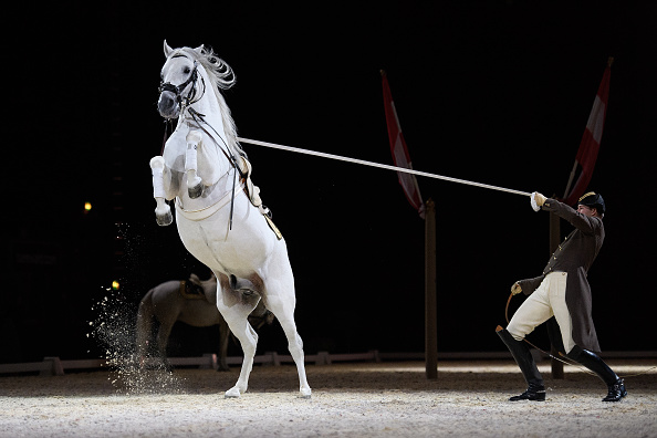 Horse「The World Famous Spanish Riding School Launch Their 450th Anniversary Tour」:写真・画像(16)[壁紙.com]