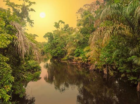 Central America「Tortuguero River, Tortuguero National Park, Costa Rica」:スマホ壁紙(10)
