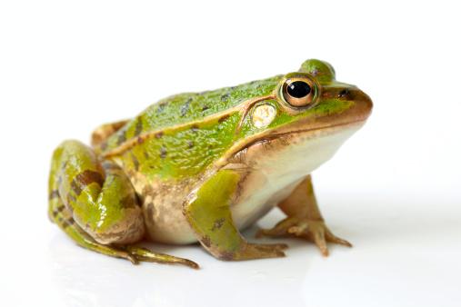 Frog「Frog」:スマホ壁紙(2)
