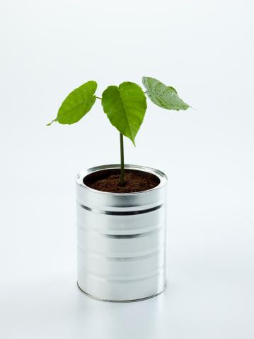 Planting「Small tree」:スマホ壁紙(18)
