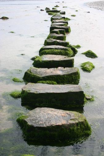Stability「mossy stepping stones」:スマホ壁紙(14)