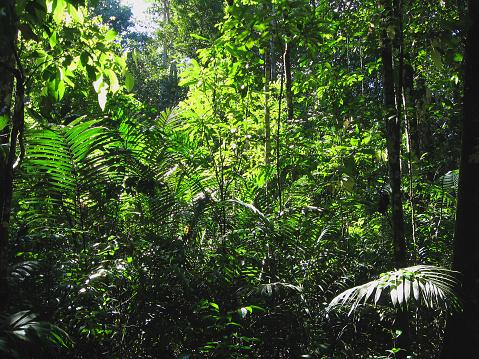 Amazon Rainforest「Rainforest near Manaus, Brazil」:スマホ壁紙(3)