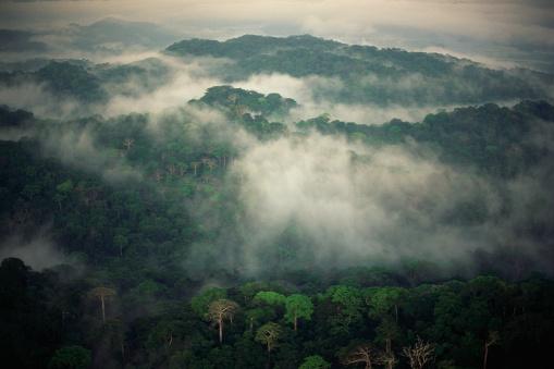 1980-1989「Rainforest Shrouded in Fog」:スマホ壁紙(12)