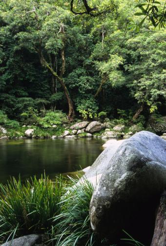Queensland「Rainforest and River, Mossman Gorge, Australia」:スマホ壁紙(18)
