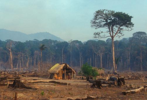 Ecosystem「Rainforest destruction」:スマホ壁紙(19)