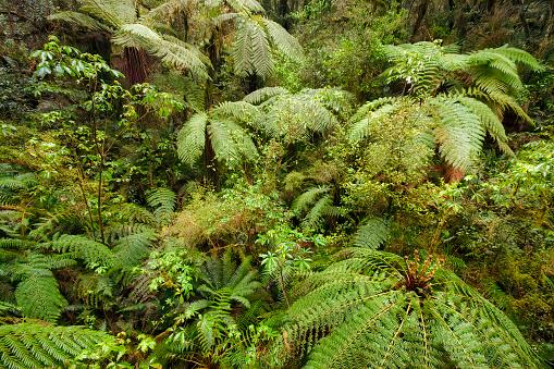 Fiordland National Park「Rainforest and ferns, Fiordland National Park, South Island, New Zealand」:スマホ壁紙(11)